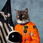 kittykatt's Avatar