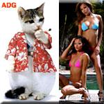 AsianDivaGirlsWebDude's Avatar